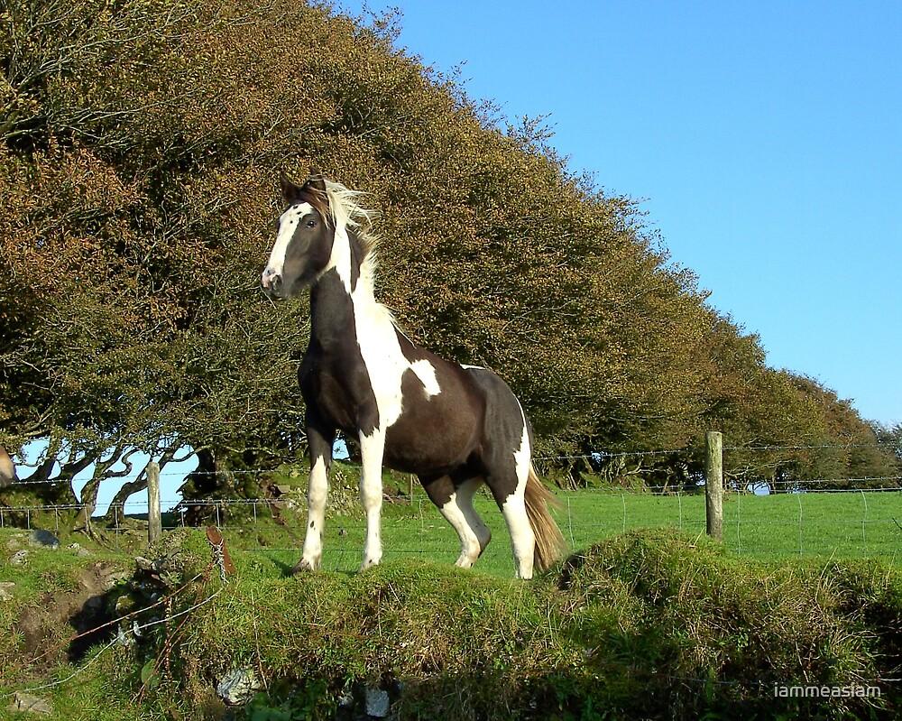 Pony by iammeasiam