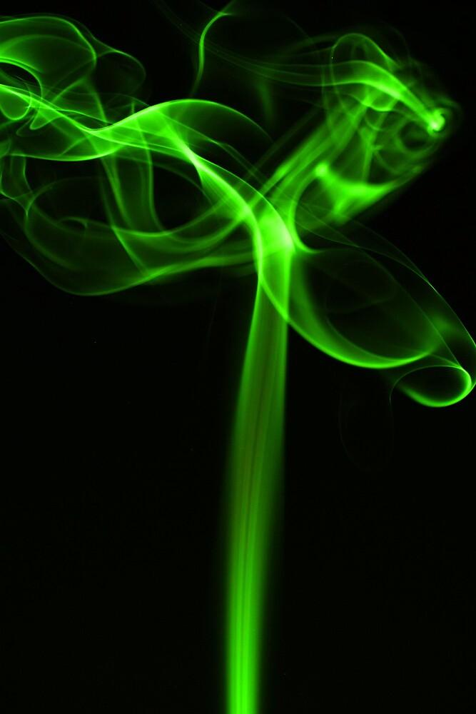SMOKE TREE by CRSPHOTO