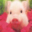 Piggy by marcocreazioni