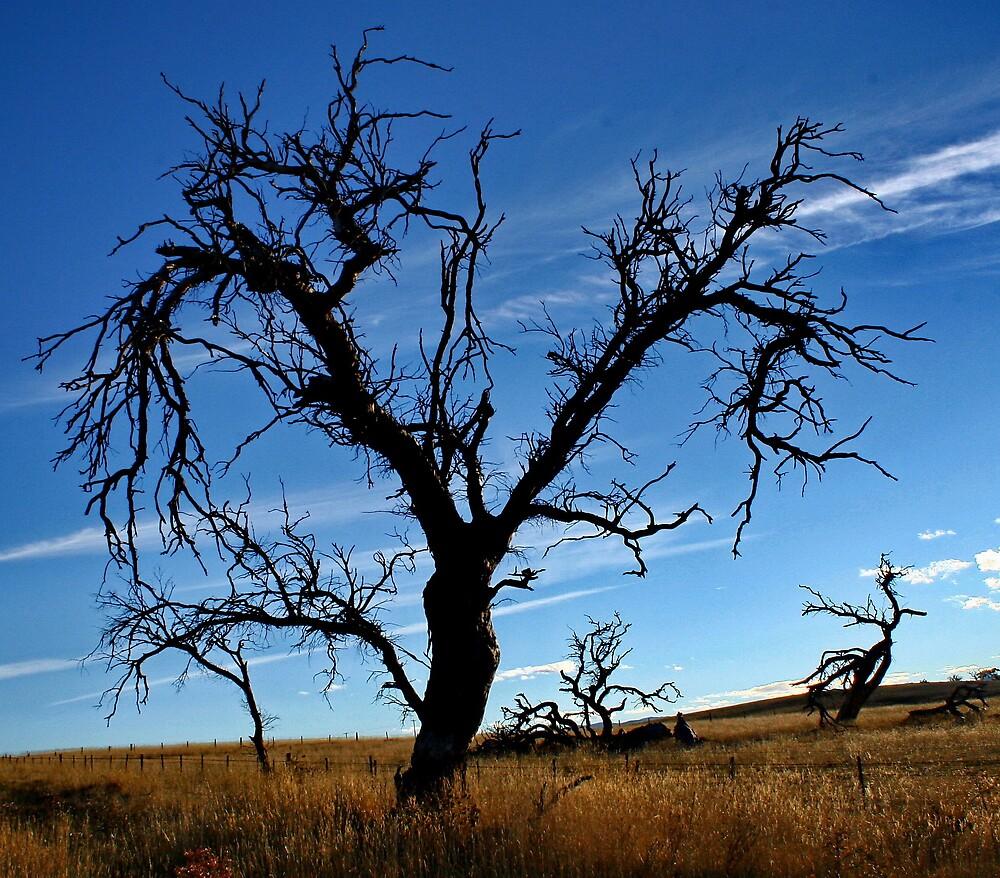 DEAD TREE by CRSPHOTO