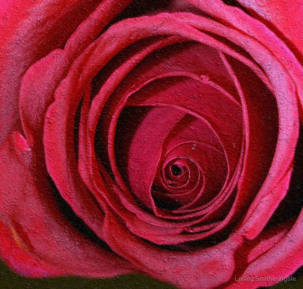 Soft Red Rose by Lesley Smitheringale