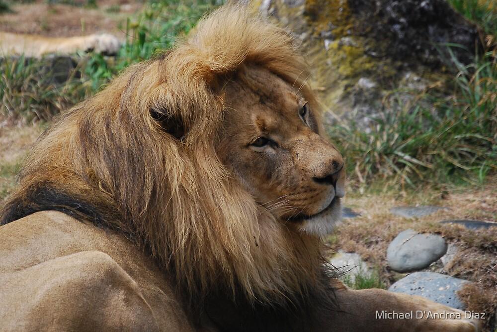 Leo by Michael D'Andrea Diaz