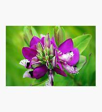 Purple Plant Photographic Print