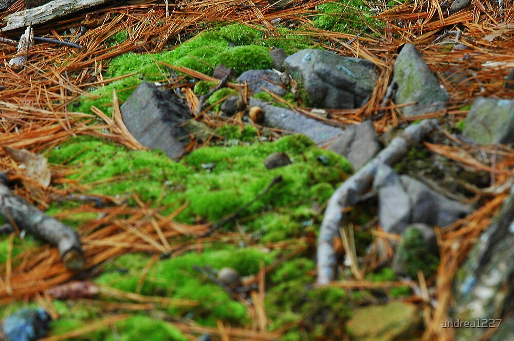 Mossy Floor by andrea1227