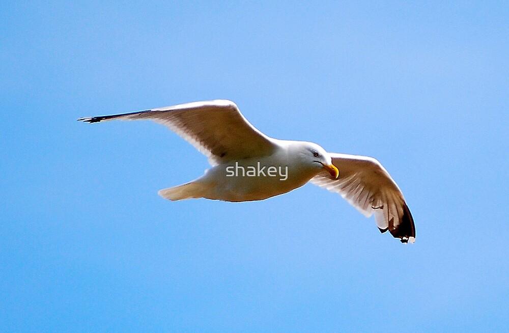 Free as a bird by shakey