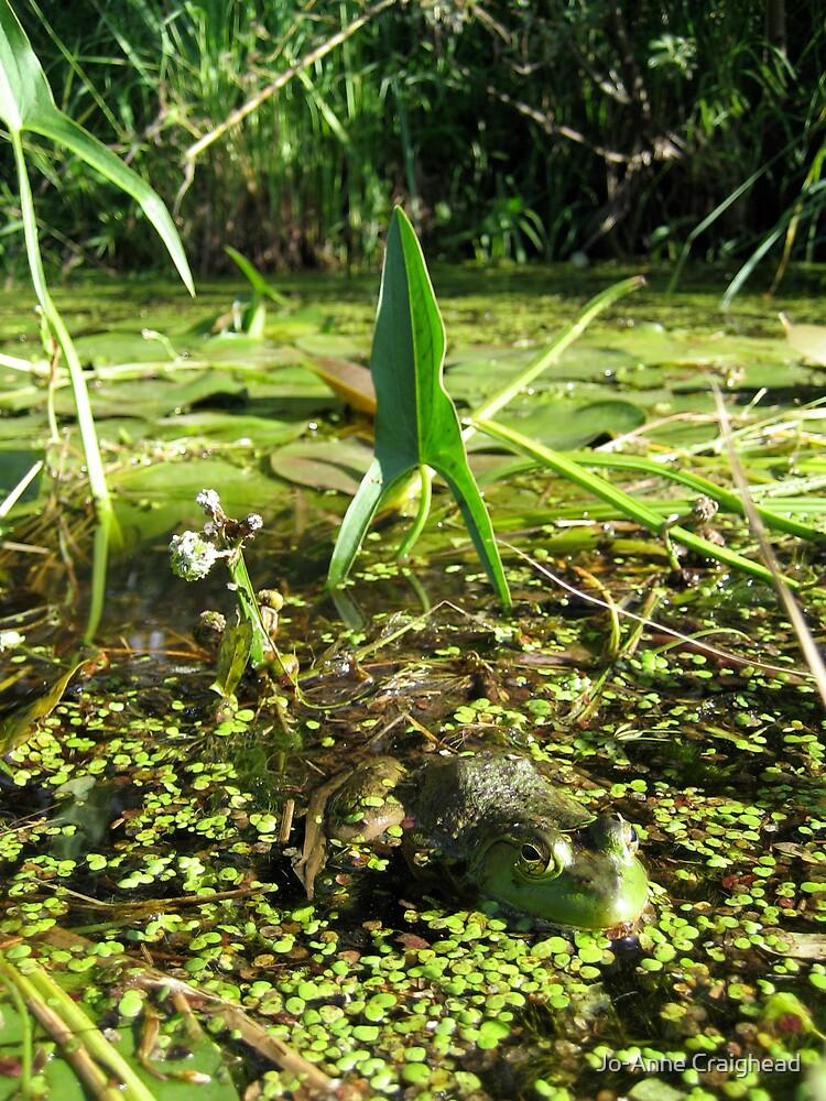 Frog Bliss by Jo-Anne Craighead