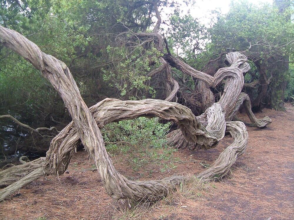 Tree Game by lucio della ratta