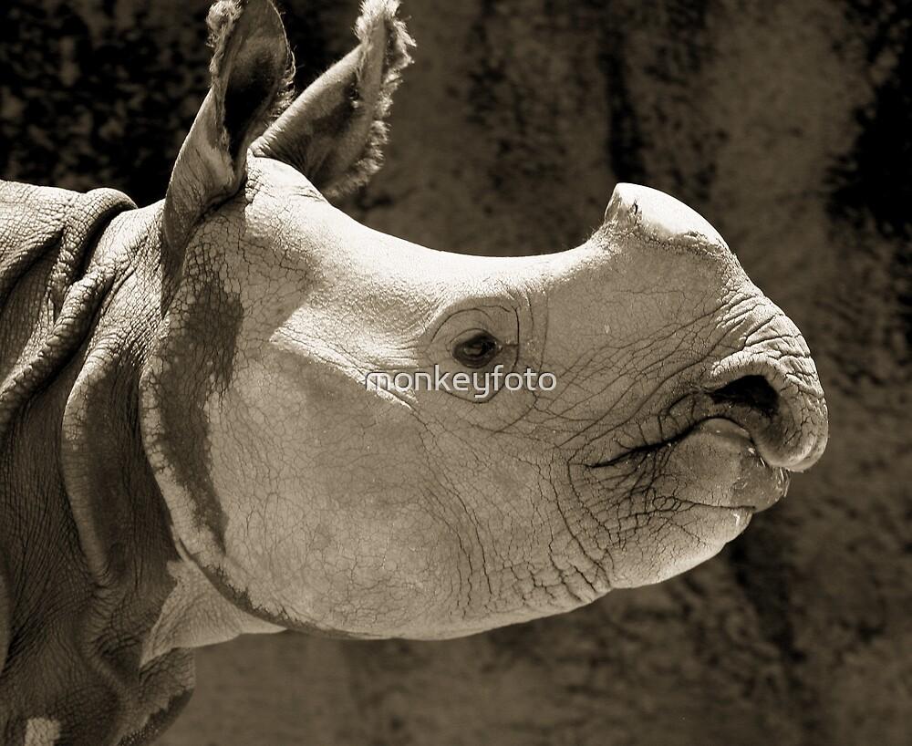 Mr Rhino@Taronga Zoo, Sydney by monkeyfoto