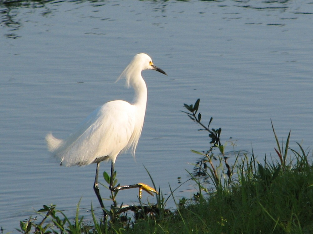 Pond beauty by danita