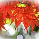 Vivid Autumn Maple Leaves with White Bokeh by Beverly Claire Kaiya