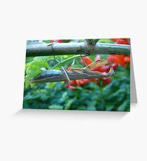 Preying Mantis Greeting Card