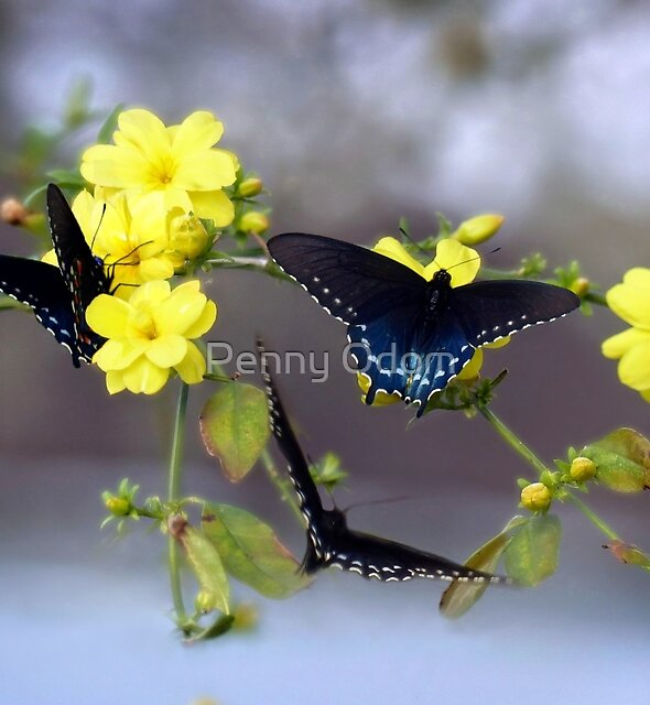 Attraction Of The Winter Jasmine by Penny Odom