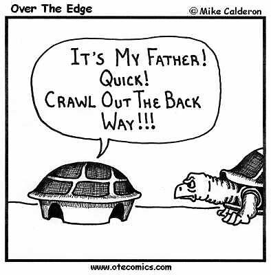 Turtles by mcaldero