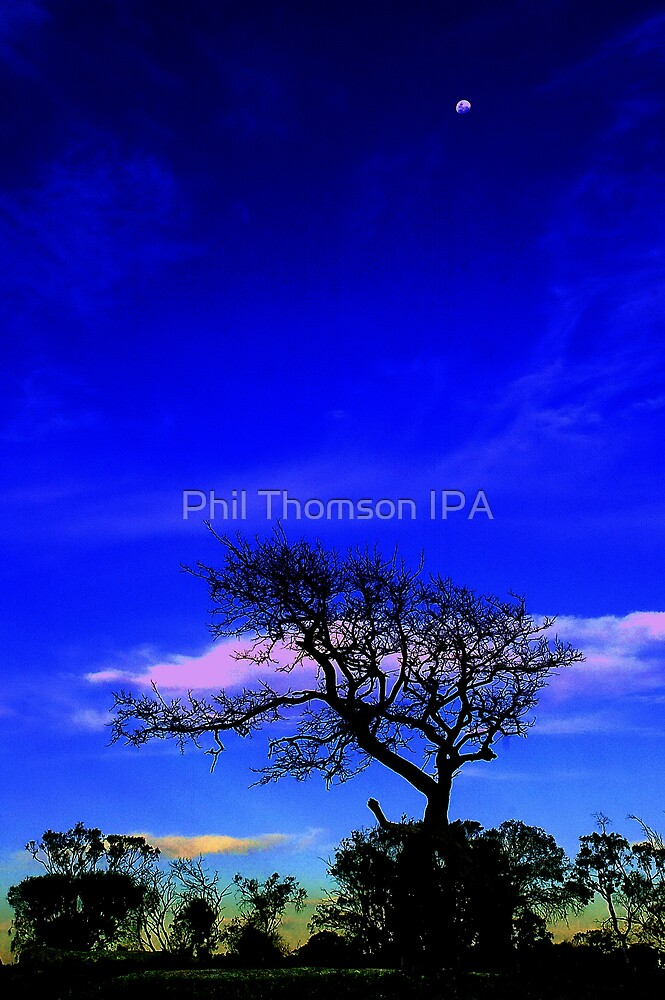 Evening Silhouette by Phil Thomson IPA