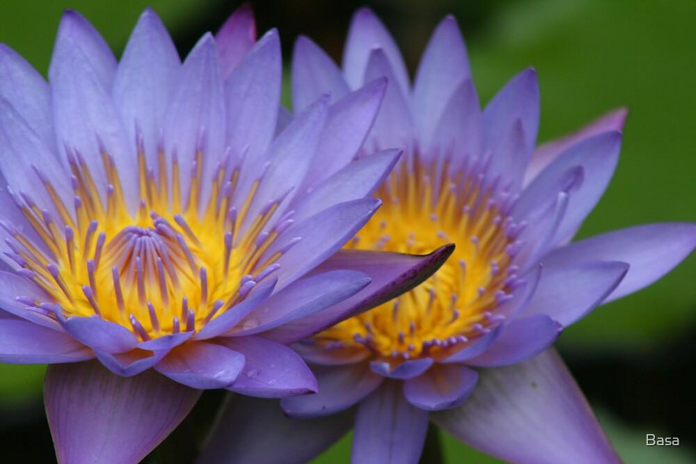 Bora Bora Purple Flower by Basa