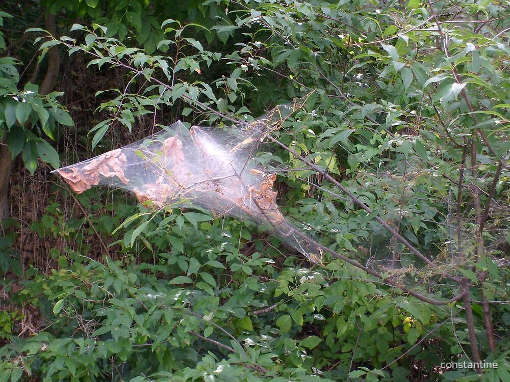 cobweb by constantine