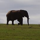 Elephant shadow by HelenBanham