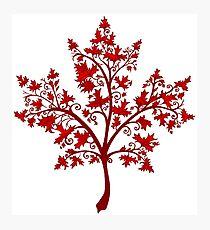 Canadian Maple Tree Photographic Print
