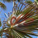 Graffiti Palm tree L.A by keshabap