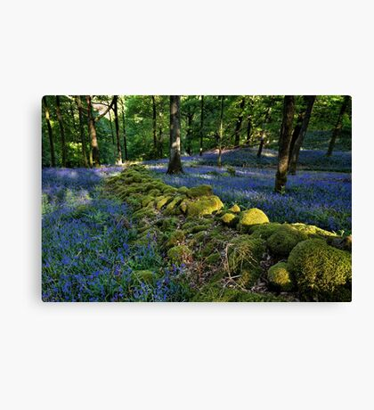 Moss River through Fishgarths Wood Canvas Print