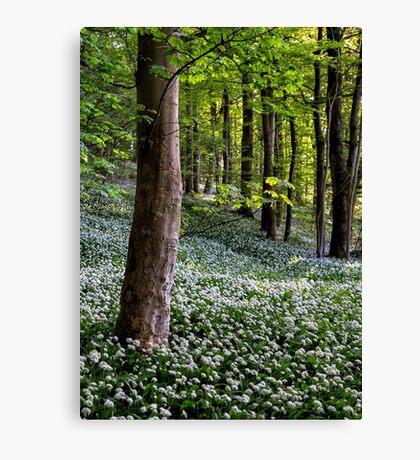 Wild Garlic Wood Canvas Print