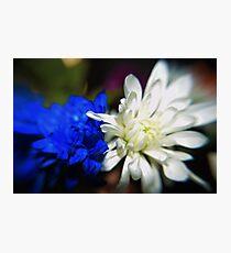 BLUE V. WHITE Photographic Print