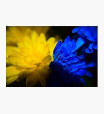BLUE v. YELLOW  Photographic Print