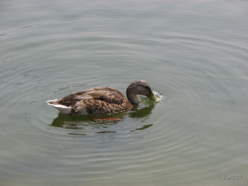 Paddle Like A Duck... by Karl187