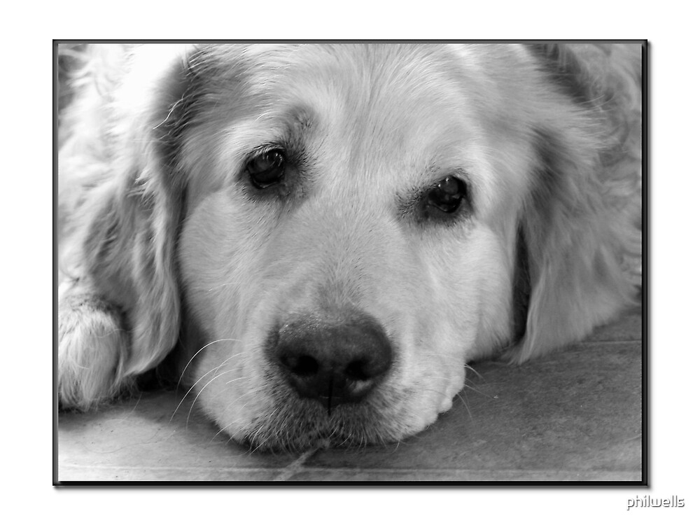 Old Dog by philwells