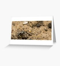 Spider eyes Greeting Card