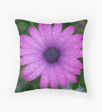 Purple African Daisy with Raindrops Throw Pillow