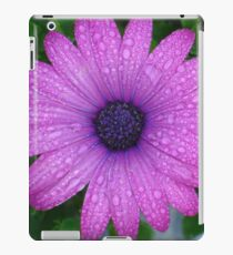 Purple African Daisy with Raindrops iPad Case/Skin