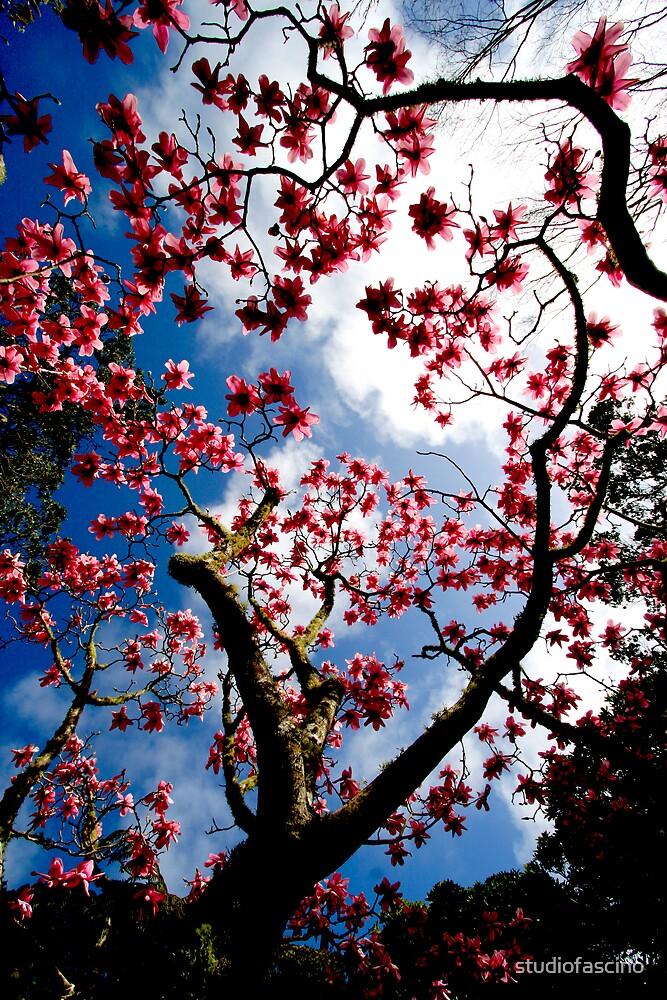 magnolia forever by studiofascino