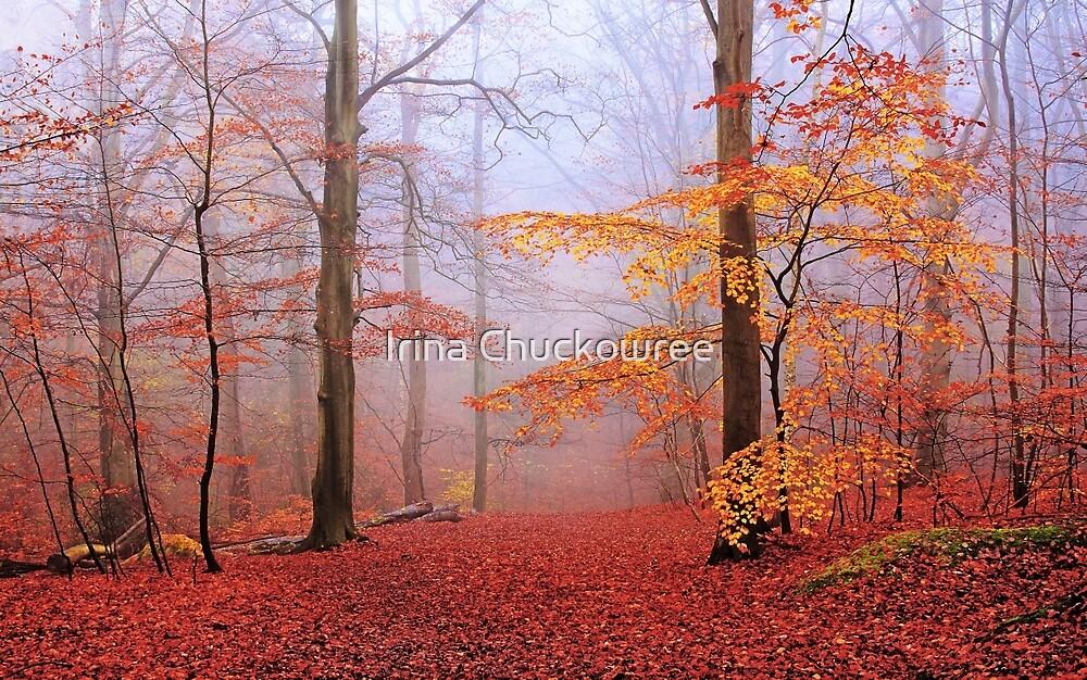 Beech Forest. November. by Irina Chuckowree