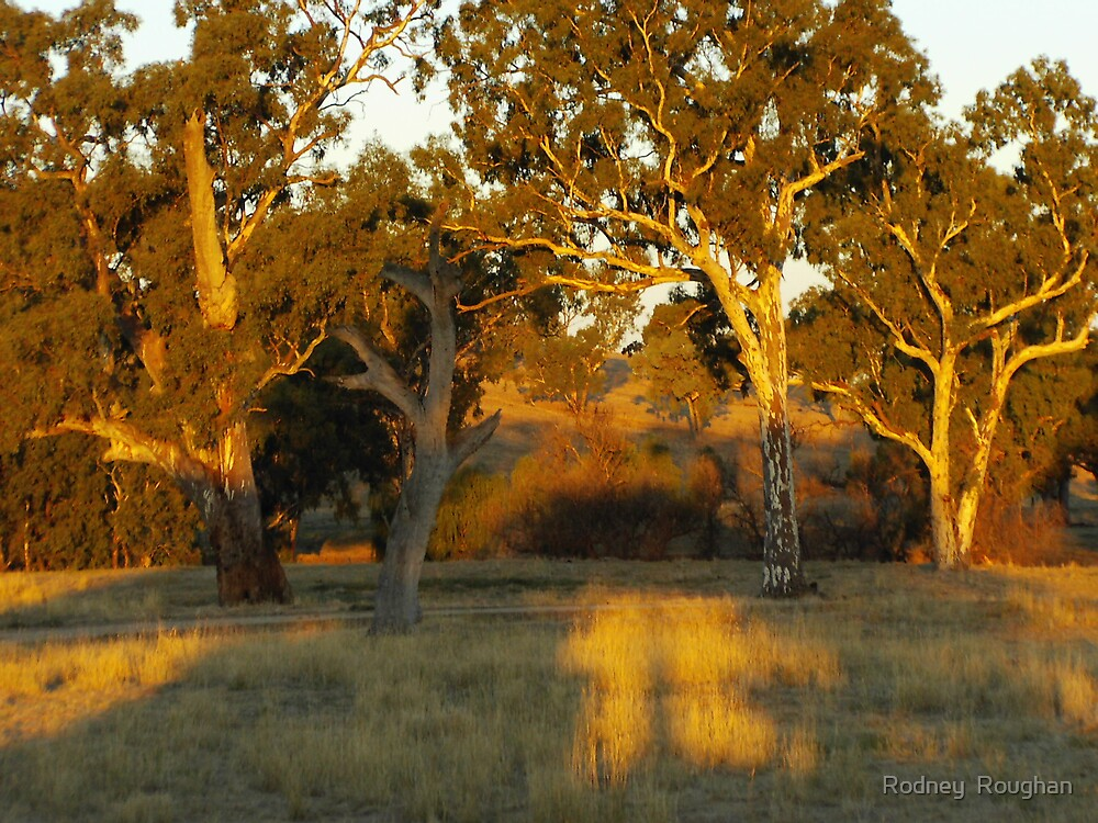 sunset in the Riverina  by Rodney  Roughan