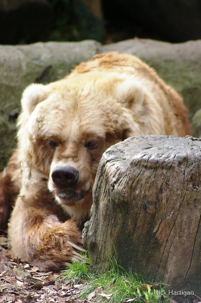 Baby Bear by Nick Hartigan