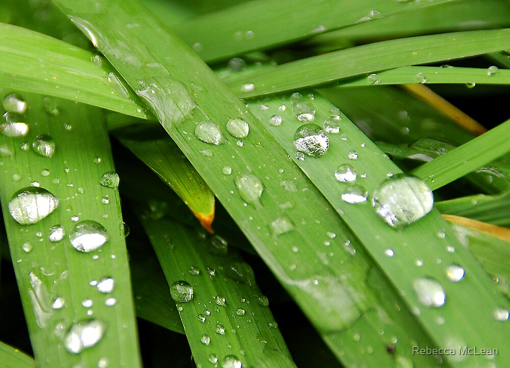 Droplets by Rebecca McLean