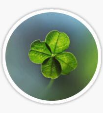 Lucky Four Leaf Clover. Irish Lucky Shamrock Sticker