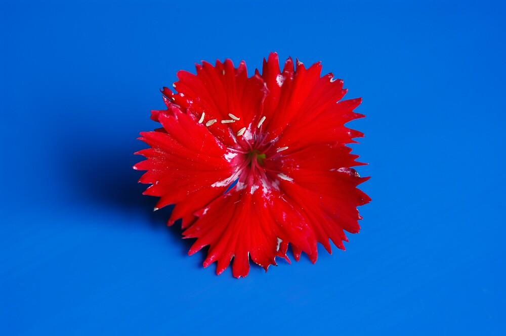 Red + Blue by JCR2