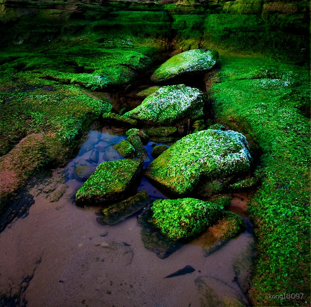 Love the green Moss!! by kong18097