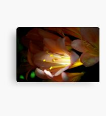 Flower in the light Canvas Print