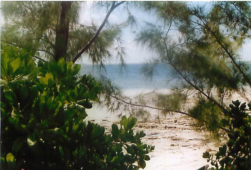 Boca Grande  by Janice Makofski