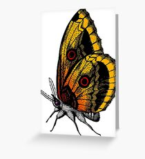 Orange and Yellow Butterfly Greeting Card