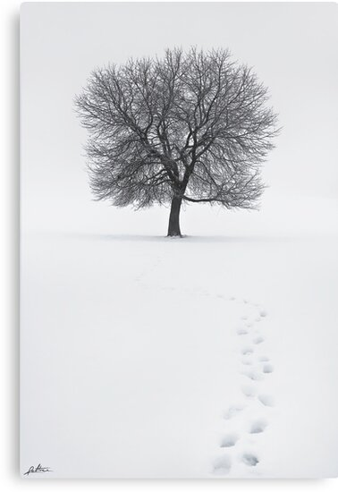 Solitude Footprints by redtree