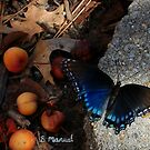 Fall buttefly by NTBrandy7