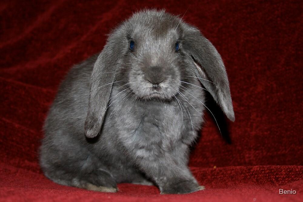 Bunny Buns by Benio