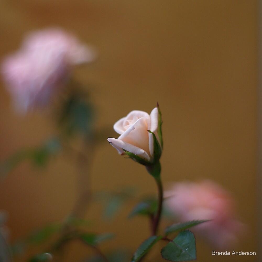 softness by Brenda Anderson