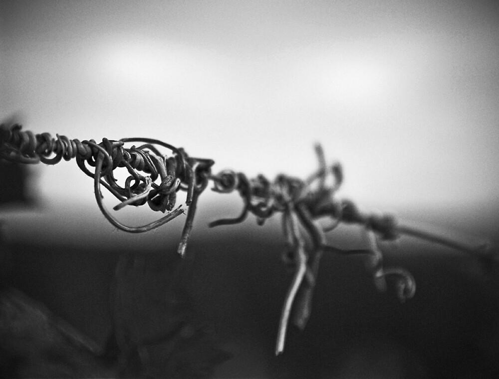Antinori Vine by Michael Mancini