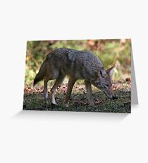 Coyote Greeting Card