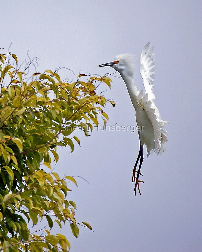 Bird in Flight by Sherry Hunsberger